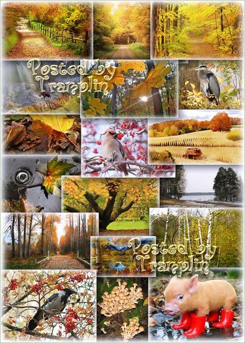 Лесов таинственная Осень