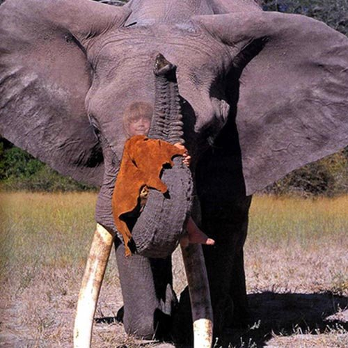 Шаблон для photoshop - Прокатиться на большом слоне