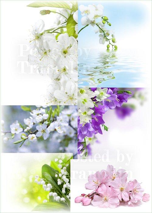Весенние цветы – Красивые нежные фоны