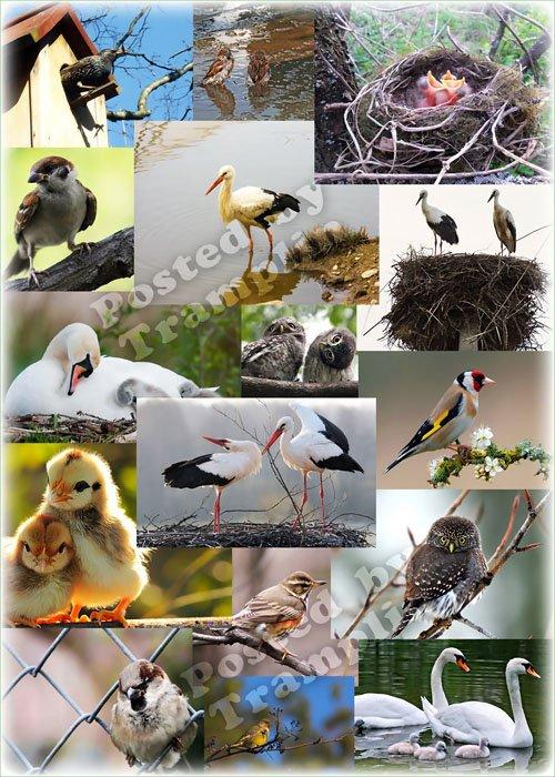 Клипарт - Птицы, весна