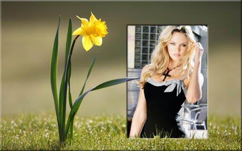 Цветущий нарцисс - Рамка для фотошоп