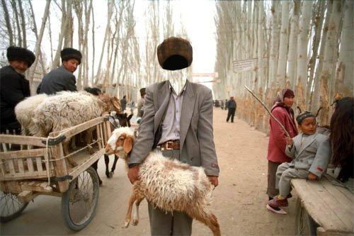 PSD шаблон для мужчин - Купил овцу