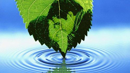 Фоторамка - Падает листок
