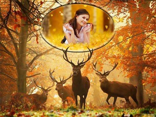 Рамка psd - Олени в лесу