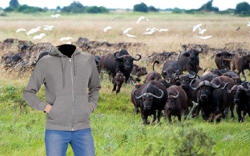 Photoshop шаблон - На поле с бизонами