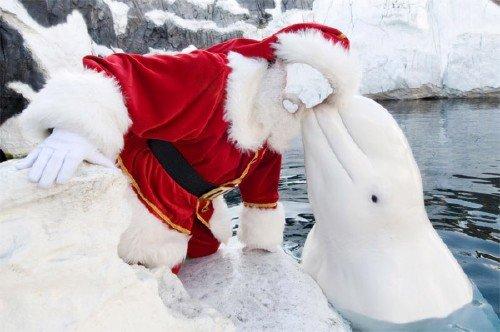 Шаблон для мужчин - В костюме деда мороза с красивым дельфином