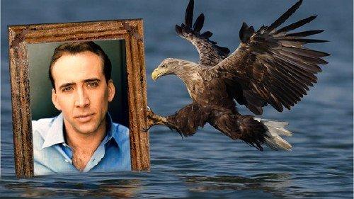 Рамка для фотошоп - В когтях орла