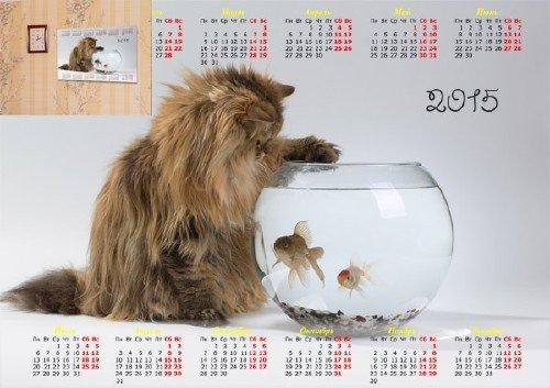 Календарь - Кот над рыбками