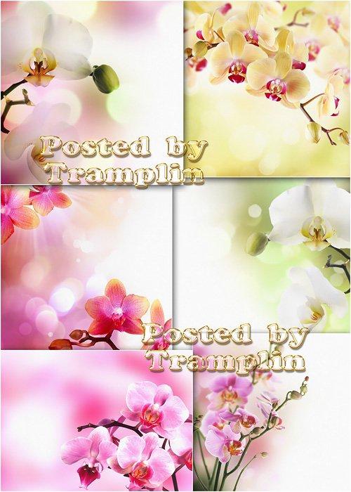 Цветочные фоны - Орхидеи