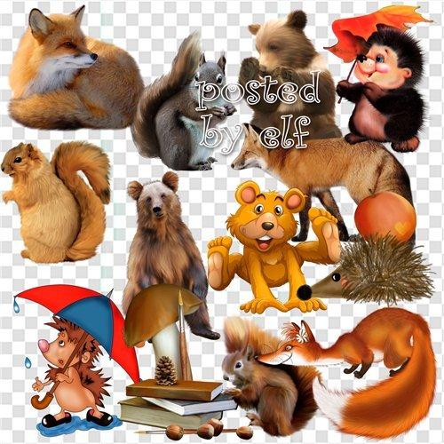 PNG клипарт - Белочки, лисички, мишки, ёжики