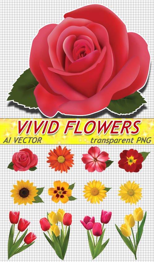 Рисованные цветущие цветы - хризантемы и тюльпаны (AI вектор)