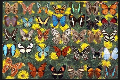 Клипарт Набор бабочек