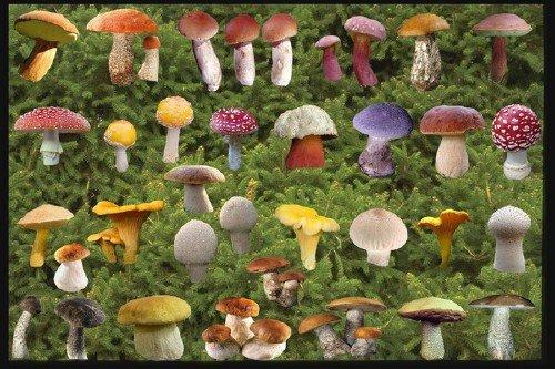 Клипарт Набор различных грибов